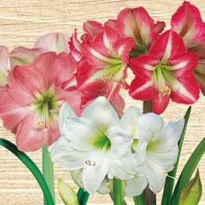 Floramagica-assortiment