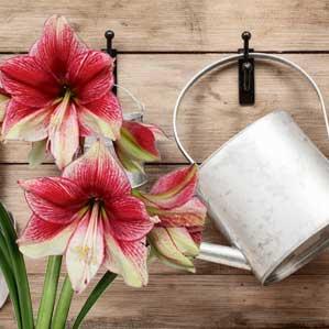 Floramagica-care